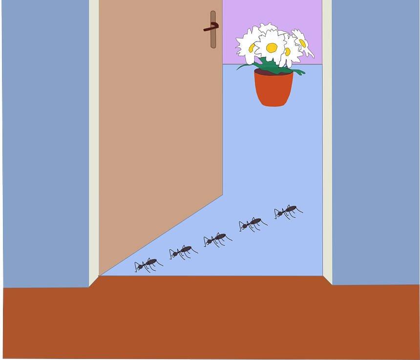 come prevenire le formiche